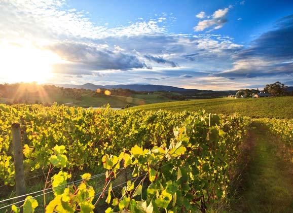 RIDE #65 Caffeine Culture – Vino, velo et vignerons